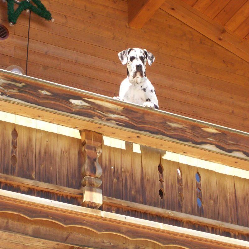Amber auf Balkon